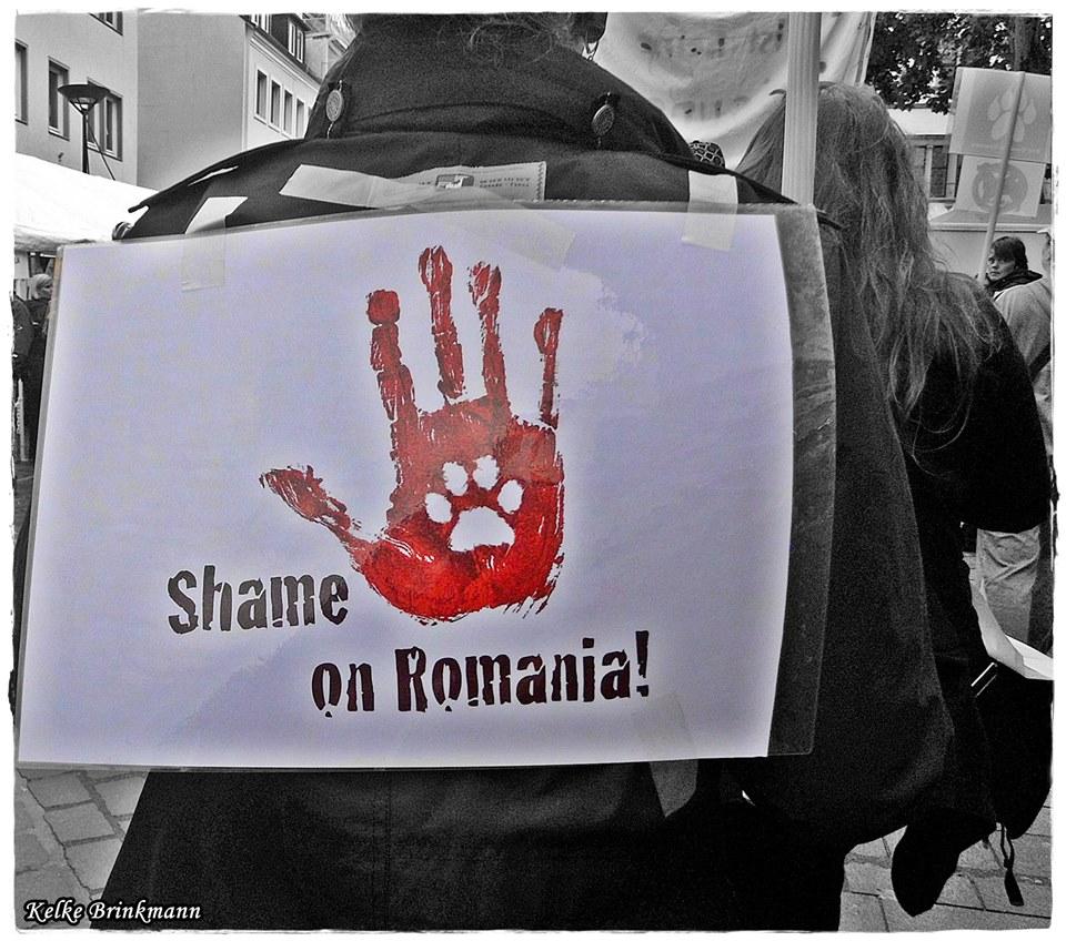 shame on